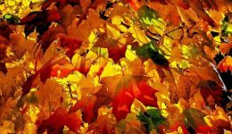 ce_autumn_painting_sunshine-beauty