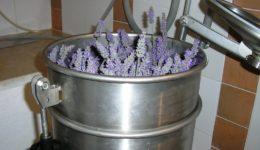 distillata1