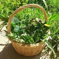 Corso di riconoscimento delle erbe spontanee